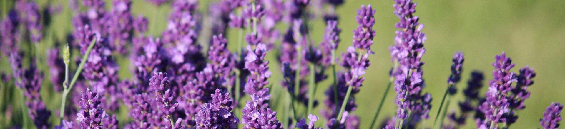 5 ingrediënten die beter niet in je schoonheidsproducten zitten